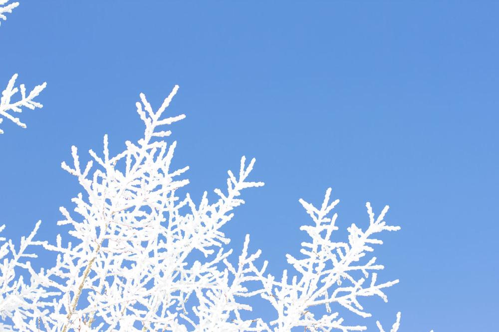 20141223 Saskatoon Christmas 2014 LJ 0307.jpg