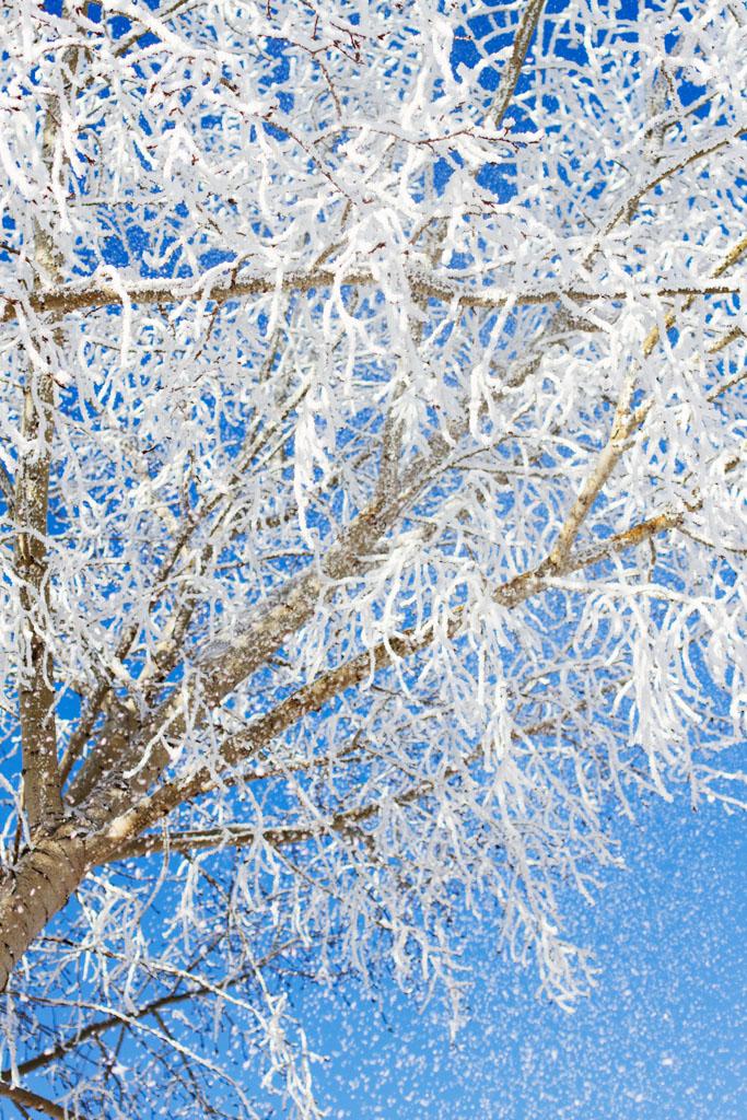 20141223 Saskatoon Christmas 2014 LJ 0313.jpg