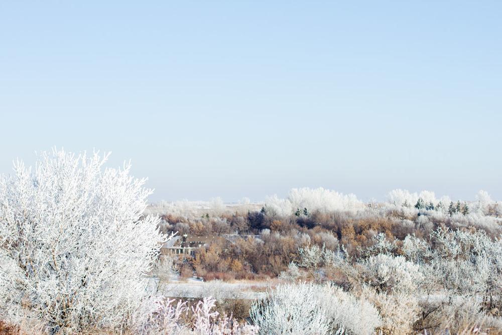 20141223 Saskatoon Christmas 2014 LJ 0337.jpg