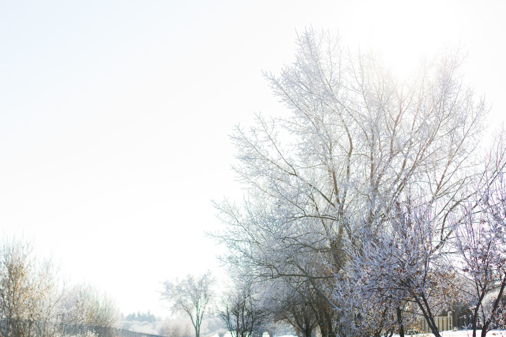 20141223 Saskatoon Christmas 2014 LJ 0332.jpg