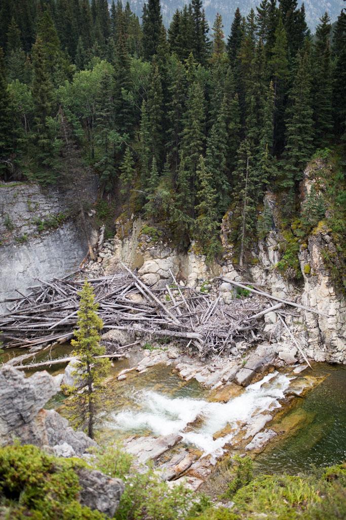 20180812 Cataract Creek 0142.jpg