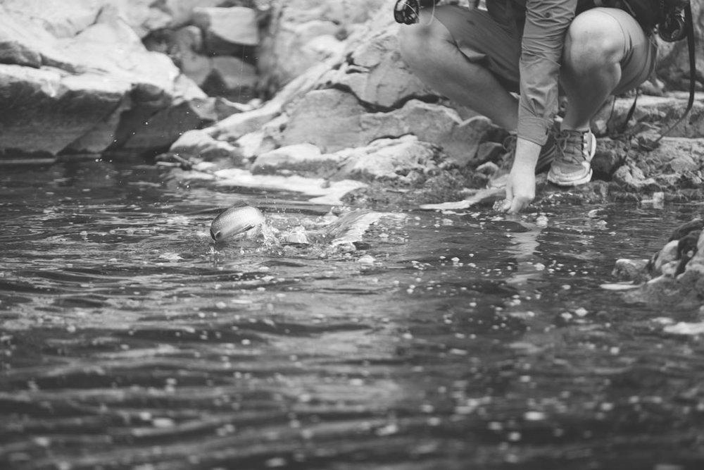 20180812 Cataract Creek 0524(B&W).jpg