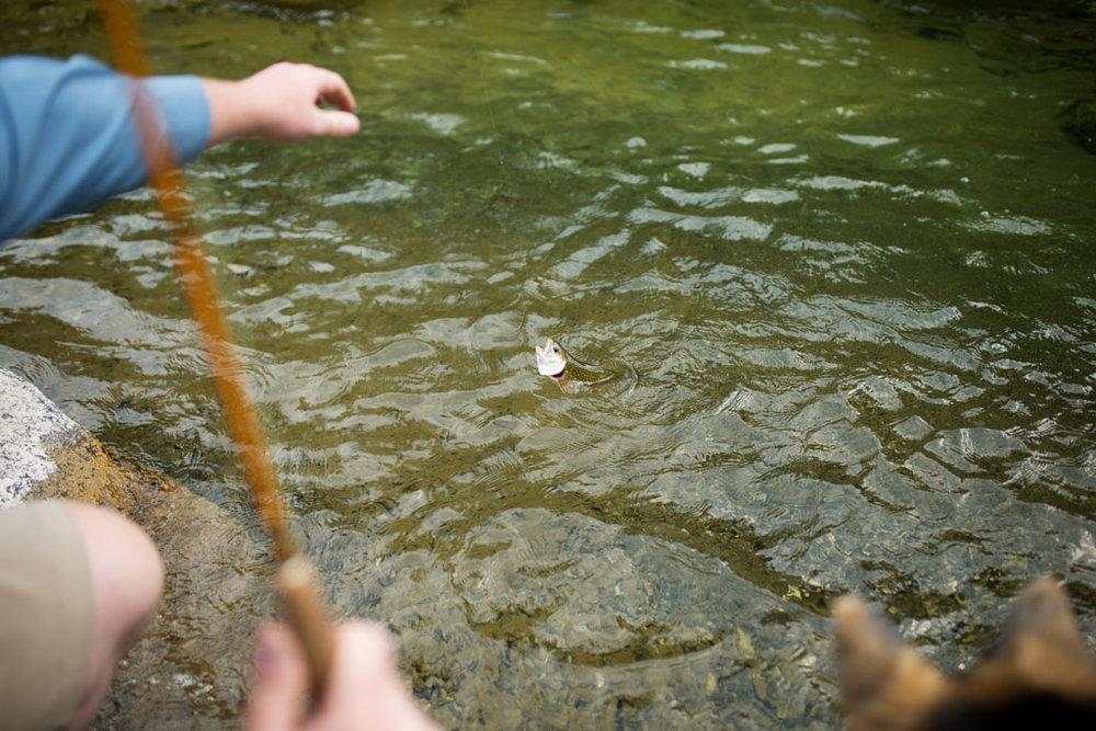 20180812 Cataract Creek 0784.jpg