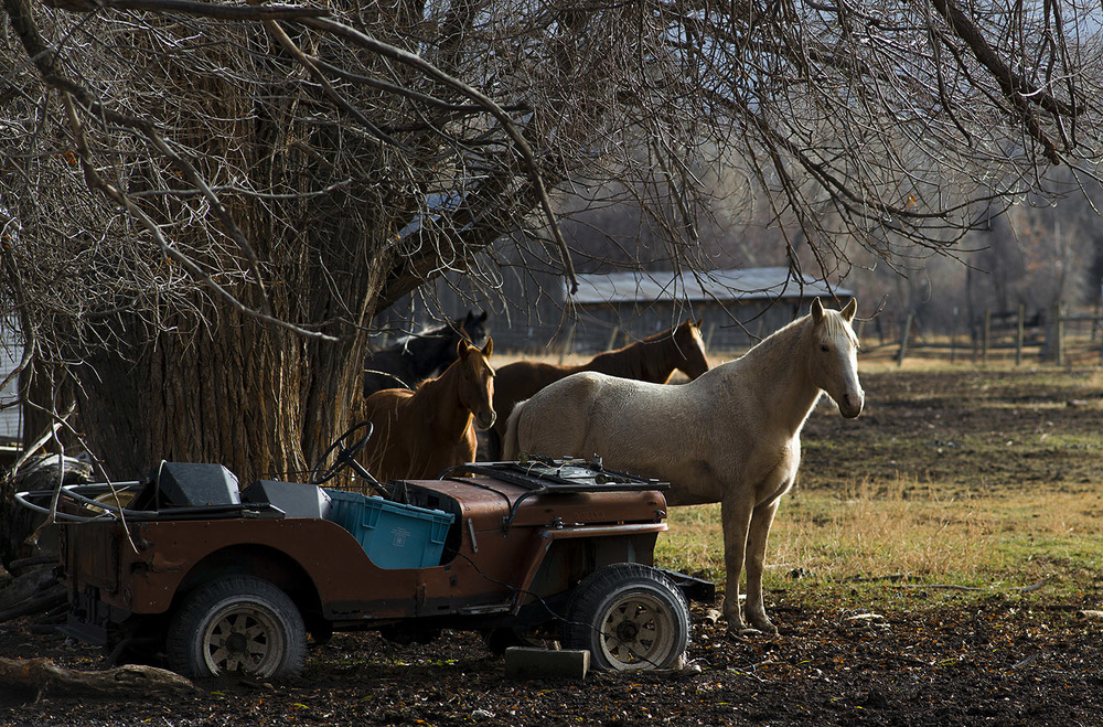 Jeep-Horse.jpg