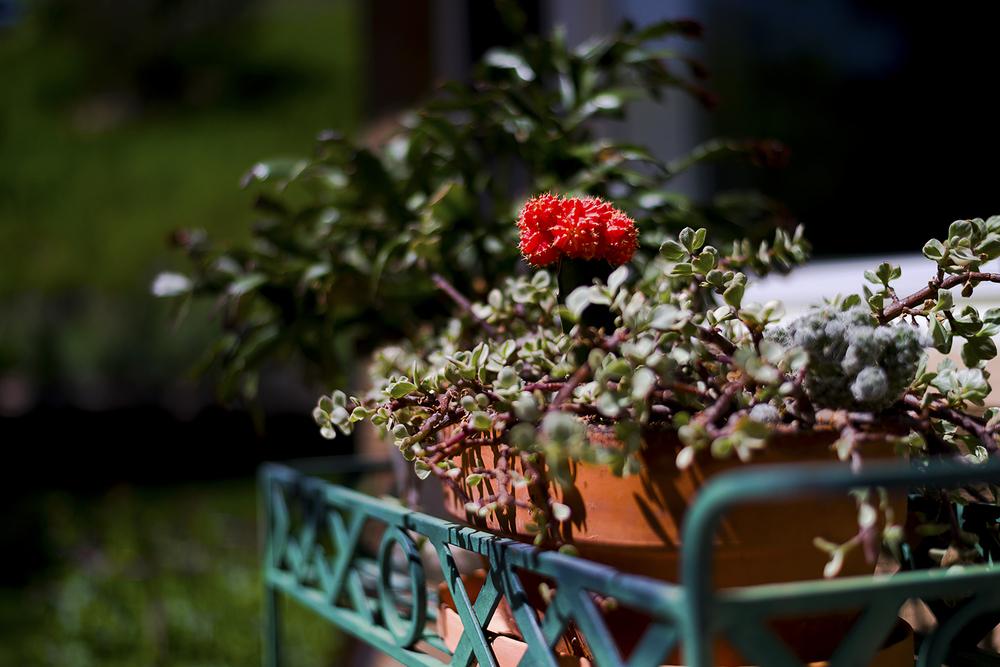 Planter Detail.jpg