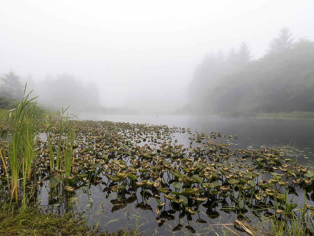 Fog-Pond Web.jpg