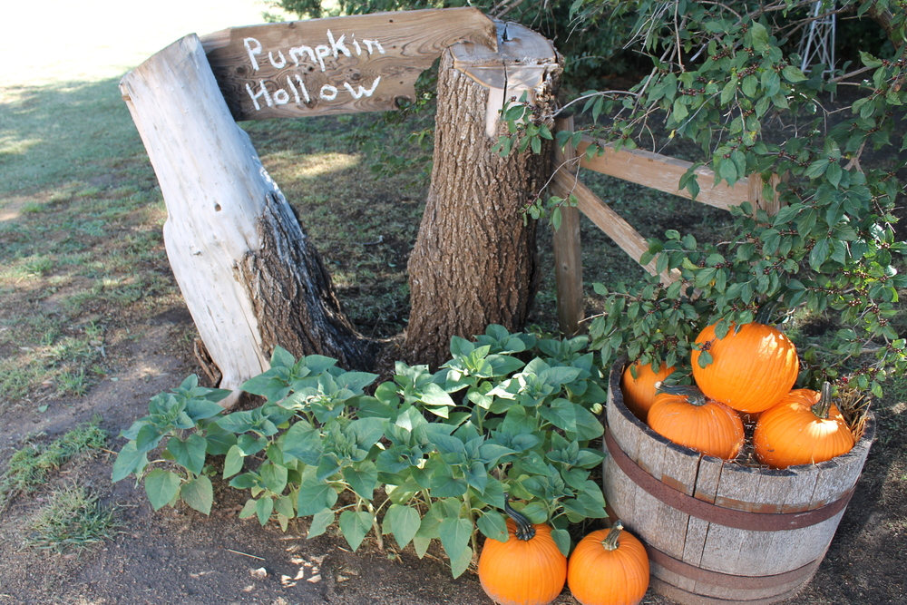 Pumpkin Hollow