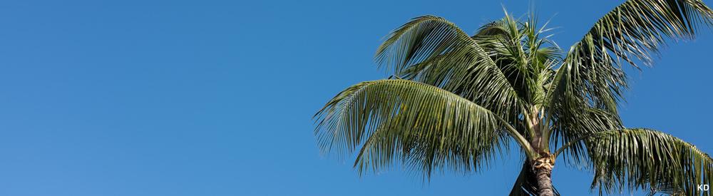 Blue sky and Palm Tree.jpg