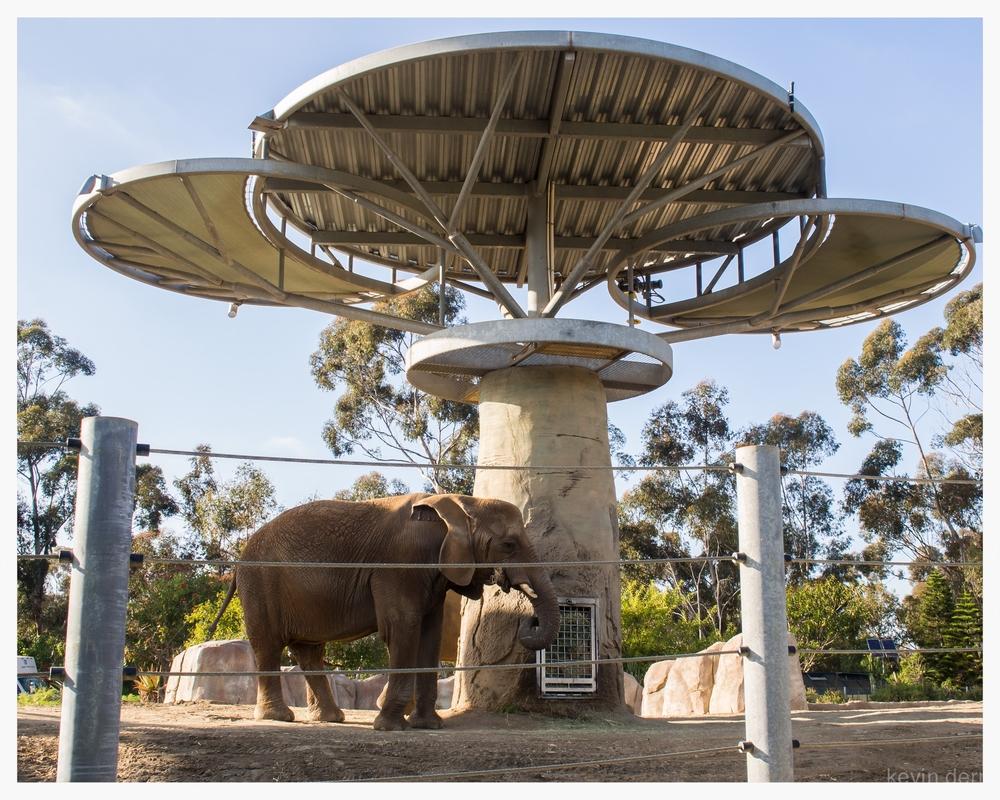 San Diego Zoo - Elephant.jpg