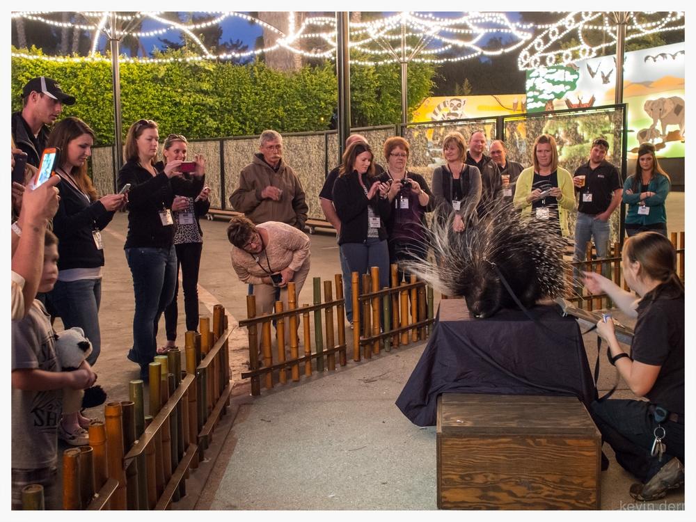 San Diego Zoo Event - Porcupine.jpg