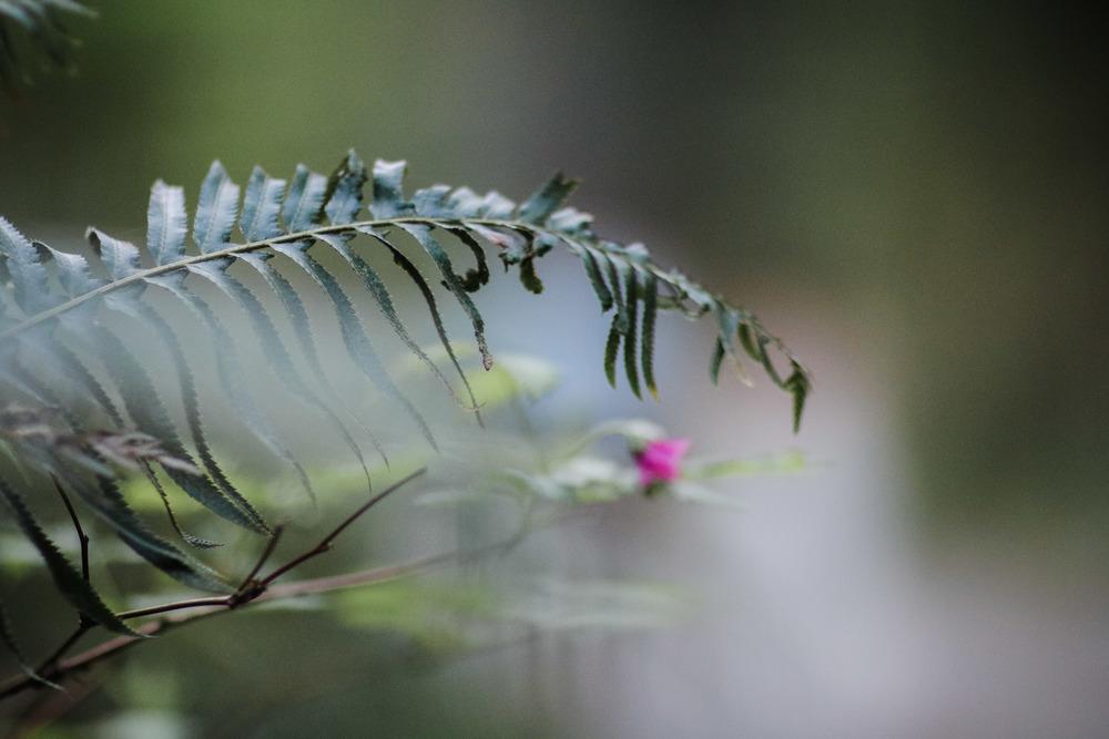 Stanley Park Ferns