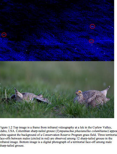G.Gillet. Evaluating infrared and sage grouse surveying
