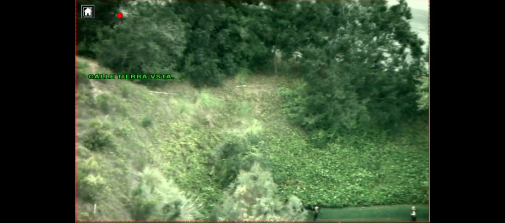 above: police target obscured by vegetation