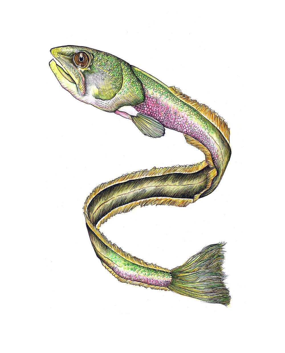 Eel Salmon