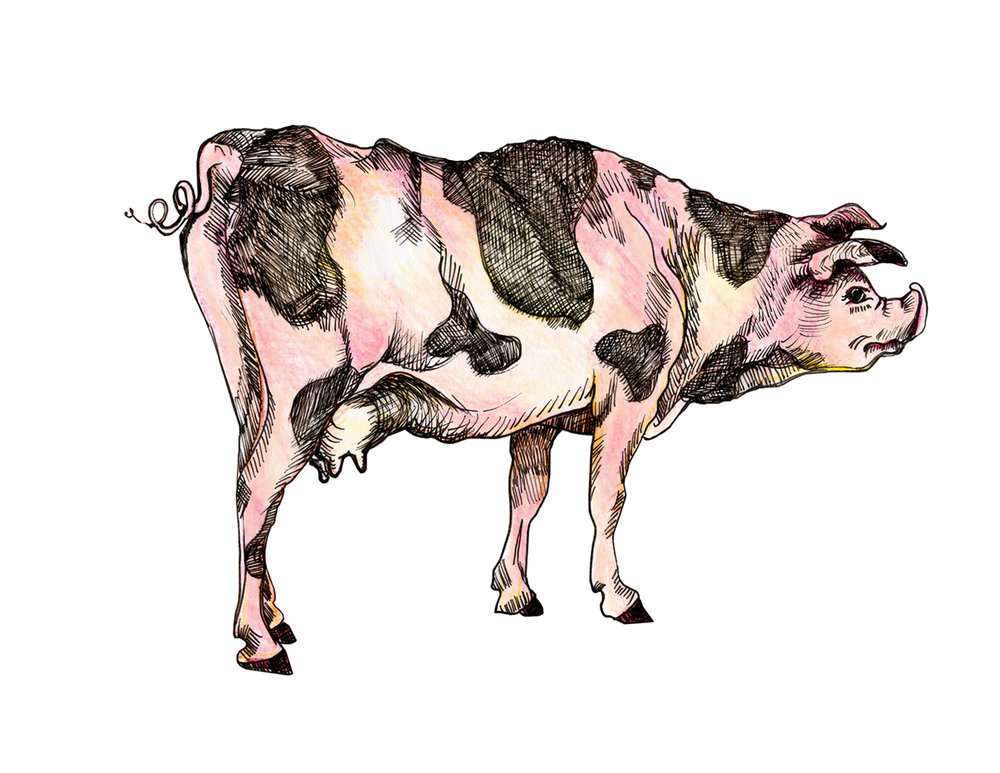 cow pig