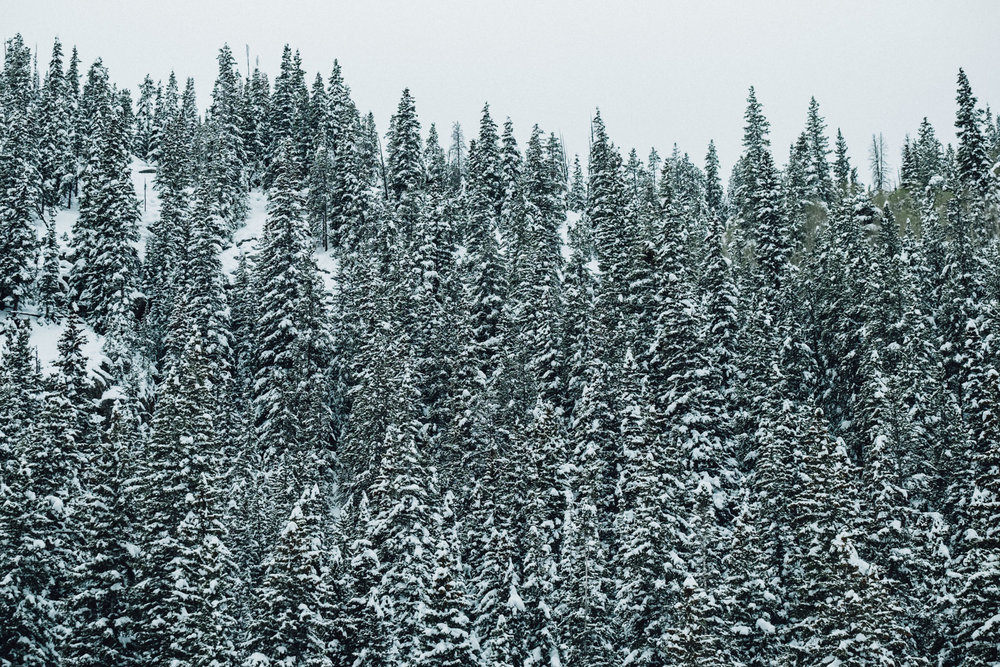 co snow-34.jpg