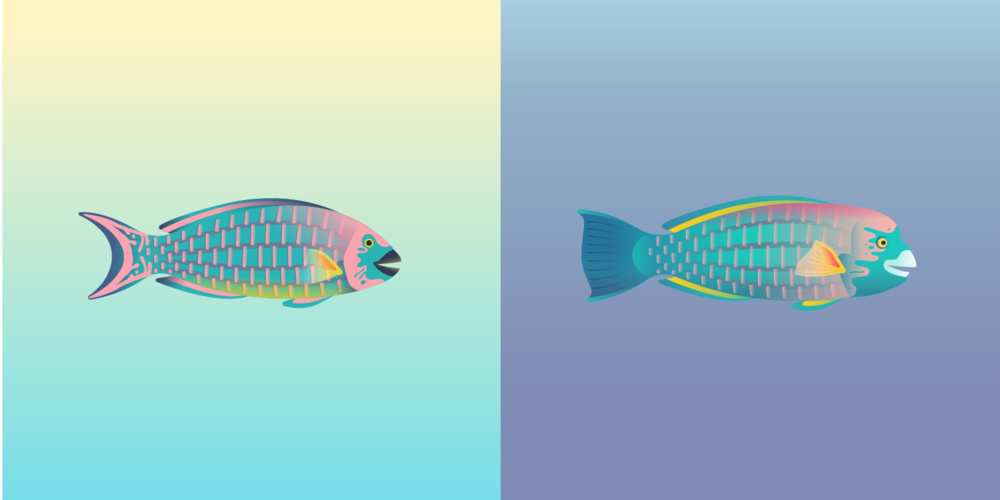 Parrotfish_edit-01.png