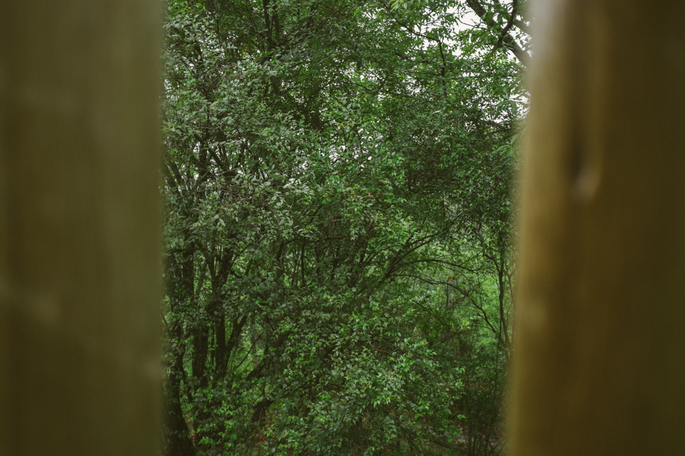 Old Pine Cabin Dylan Web-12.jpg