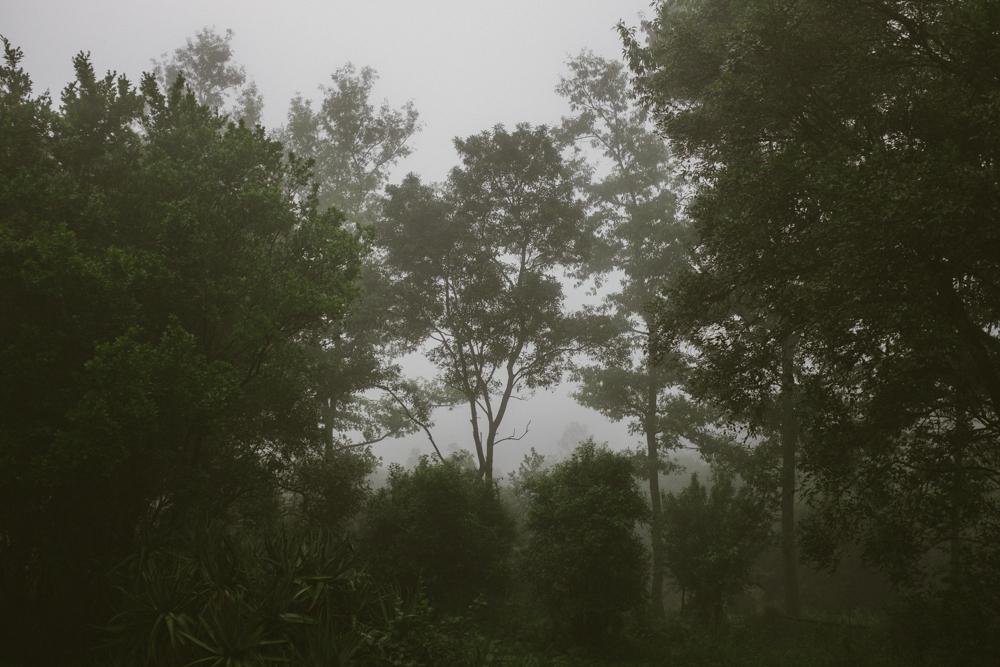 Old Pine Cabin Dylan Web-14.jpg