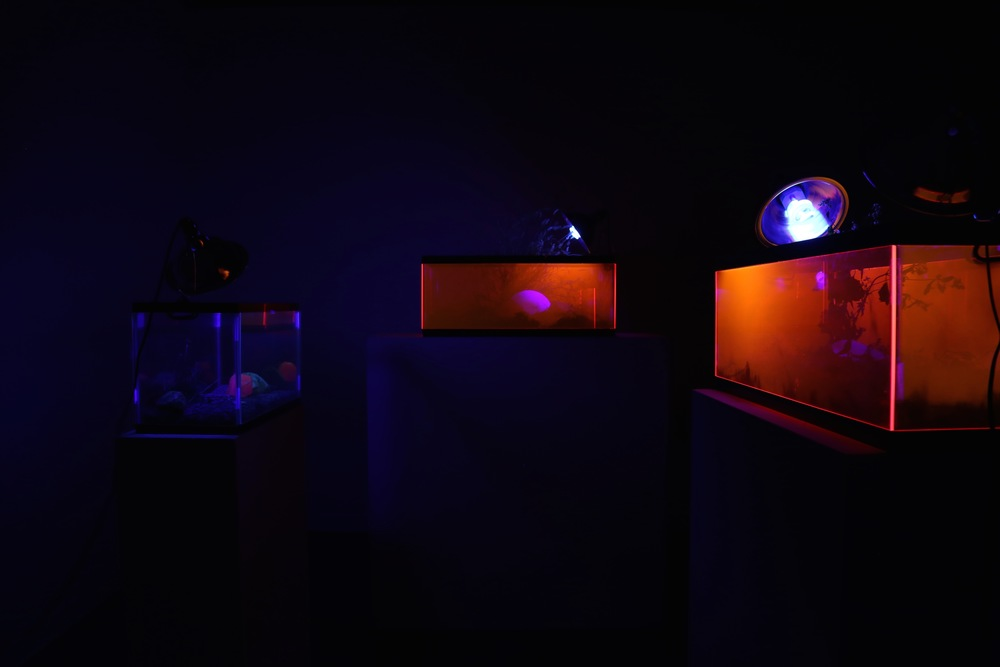 Excavation Series (Installation View)