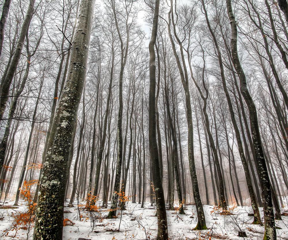Den sene vinteren og våren er ofte grå og blek, men kan også være full av atmosfære. Her fra bøkeskogen på Foksrød i Sandefjord.