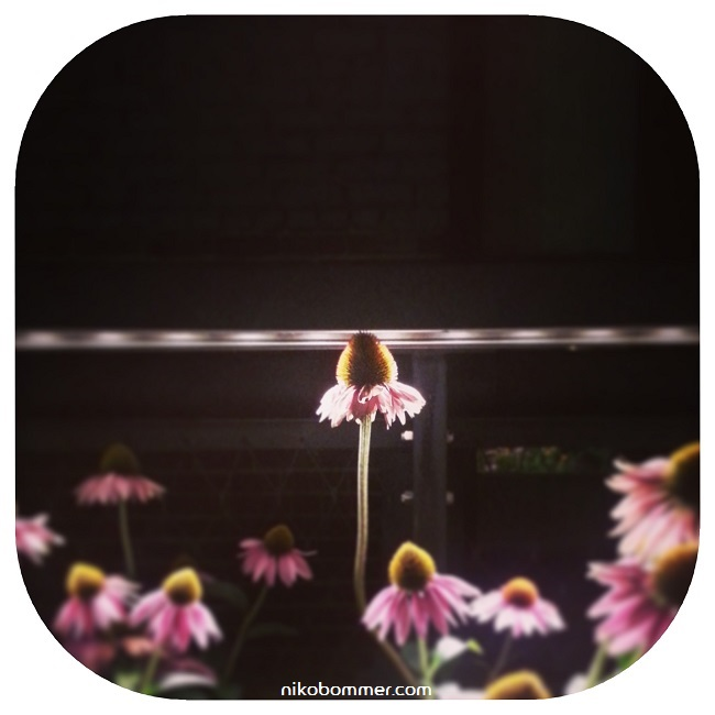 Flower650.jpg