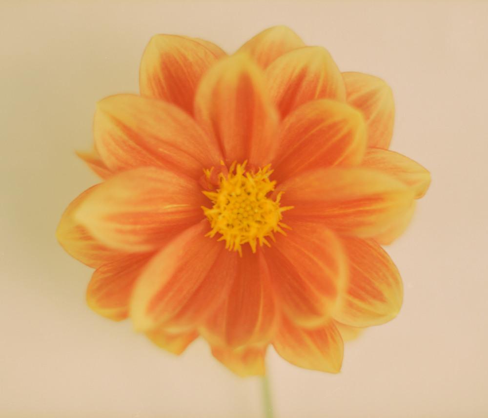 Flower House024.jpg