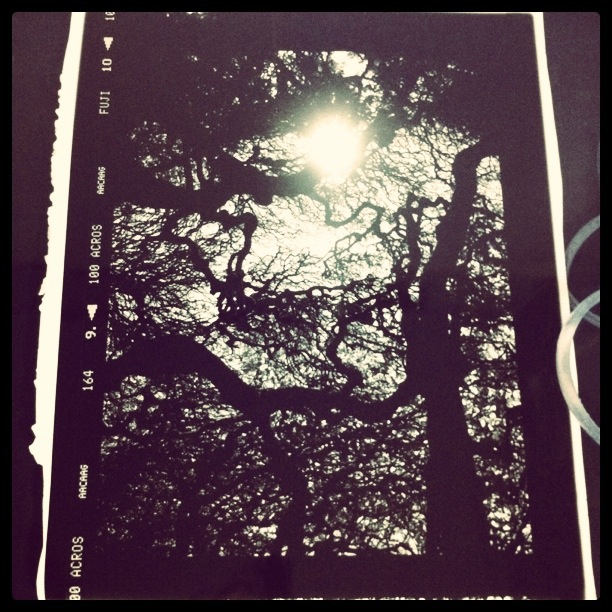 Print going through final wash. This is the first of 3 large prints I'm doing for a client. It was taken at Levens Hall in Cumbria - very near where I used to live.