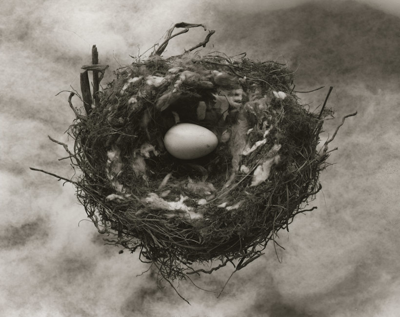 New Zealand Bird Nest.