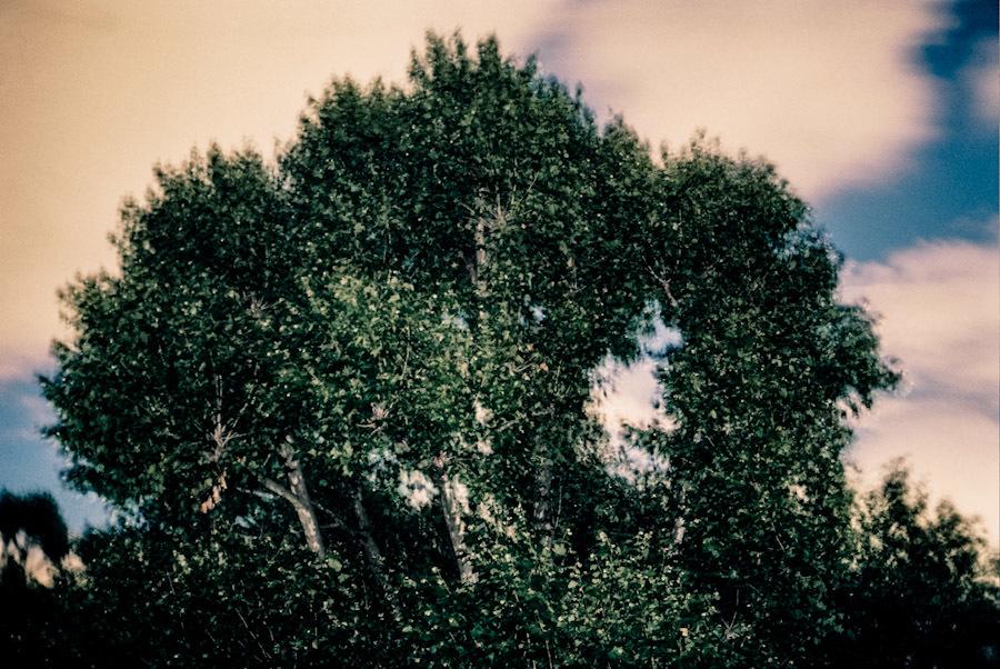 Communal garden trees 2.