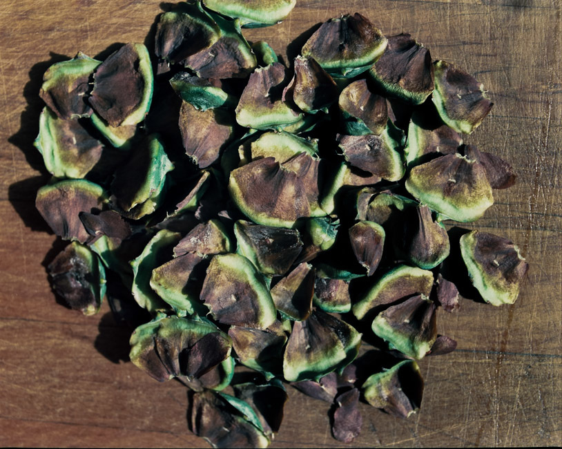 Kauri tree seeds.