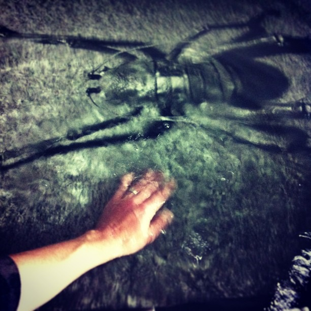 """It was all worth it. A productive day in the #darkroom - now washing this last 40""""x58"""" inch print of the #weta"""
