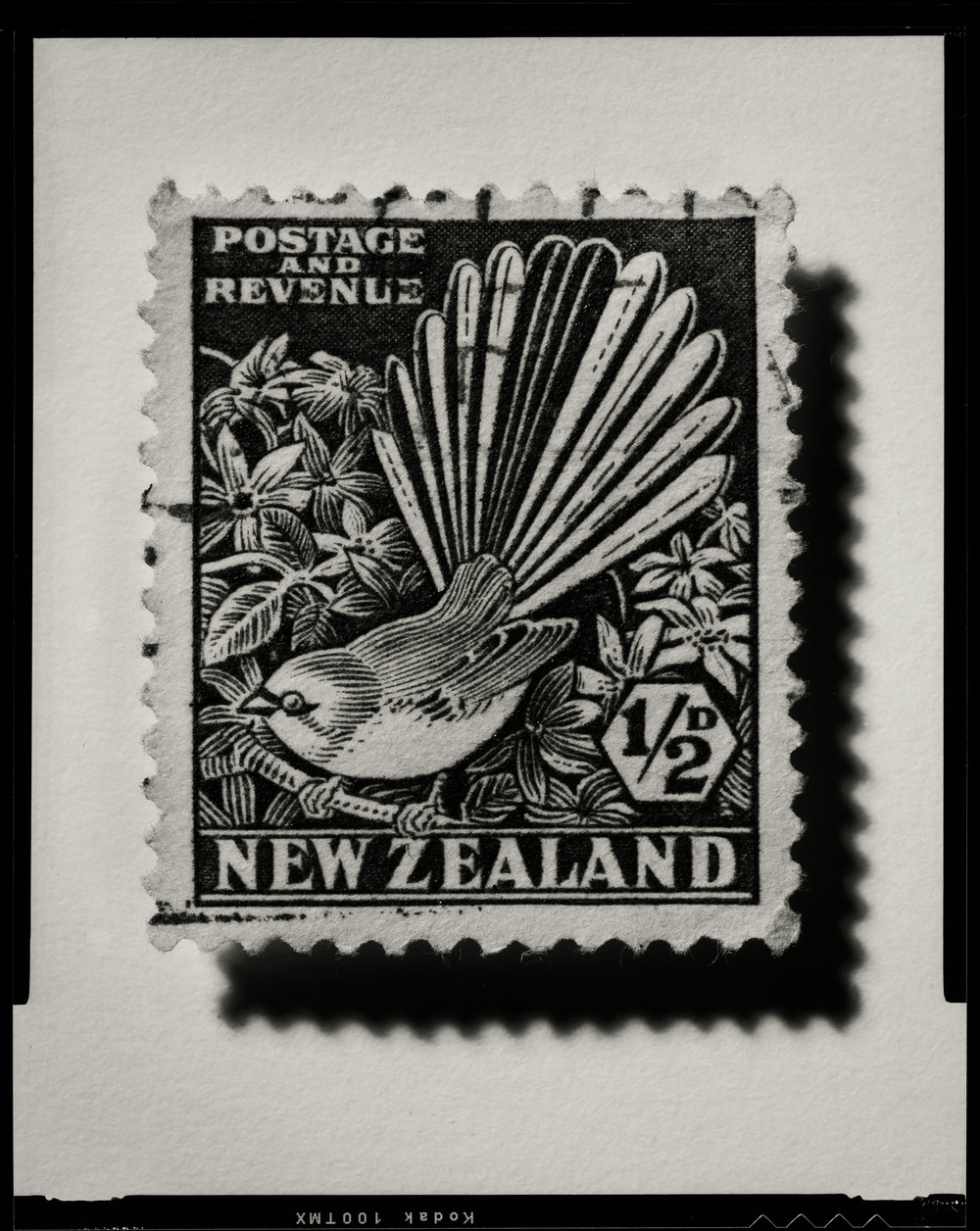 Stamps Fantail003-Edit.jpg