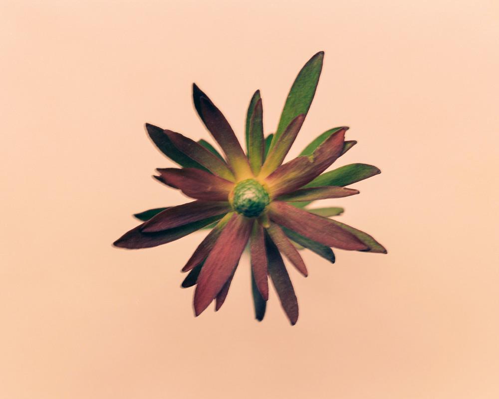 Casey Moore Flowers-0026.jpg