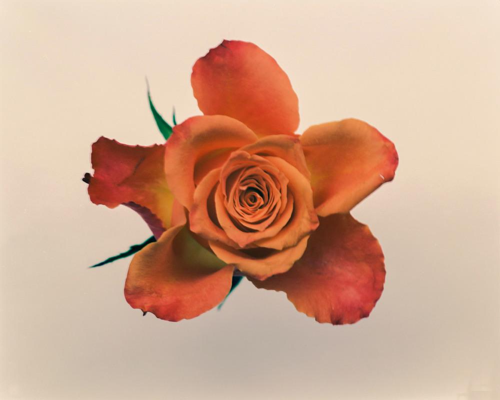 Casey Moore Flowers-0024.jpg