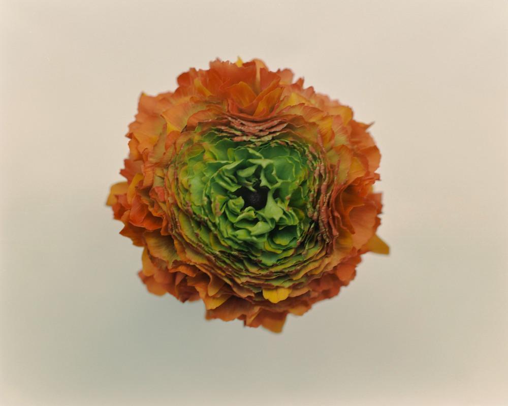 Casey Moore Flowers-0020.jpg