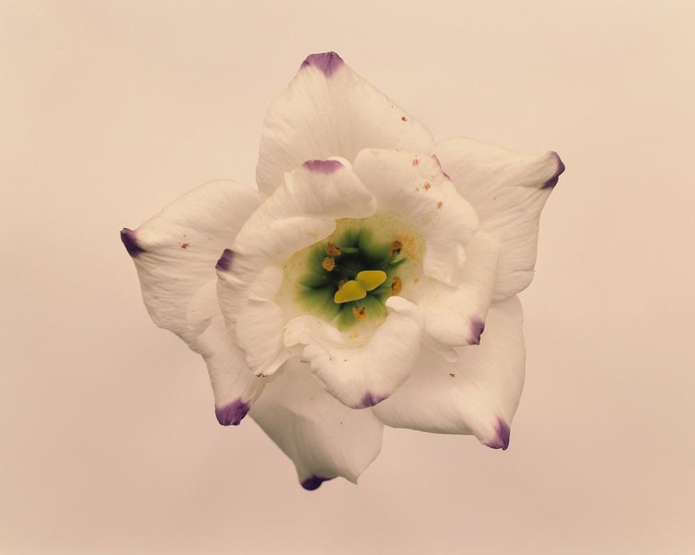 Casey Moore Flowers-0013.jpg