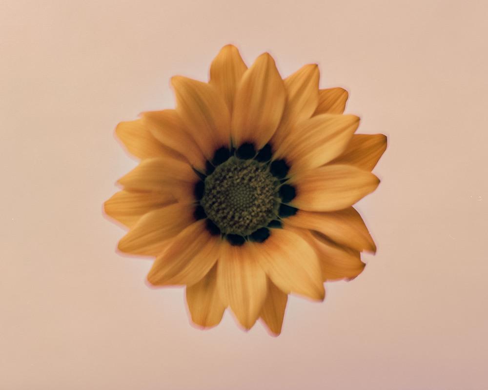 Casey Moore Flowers-24.jpg