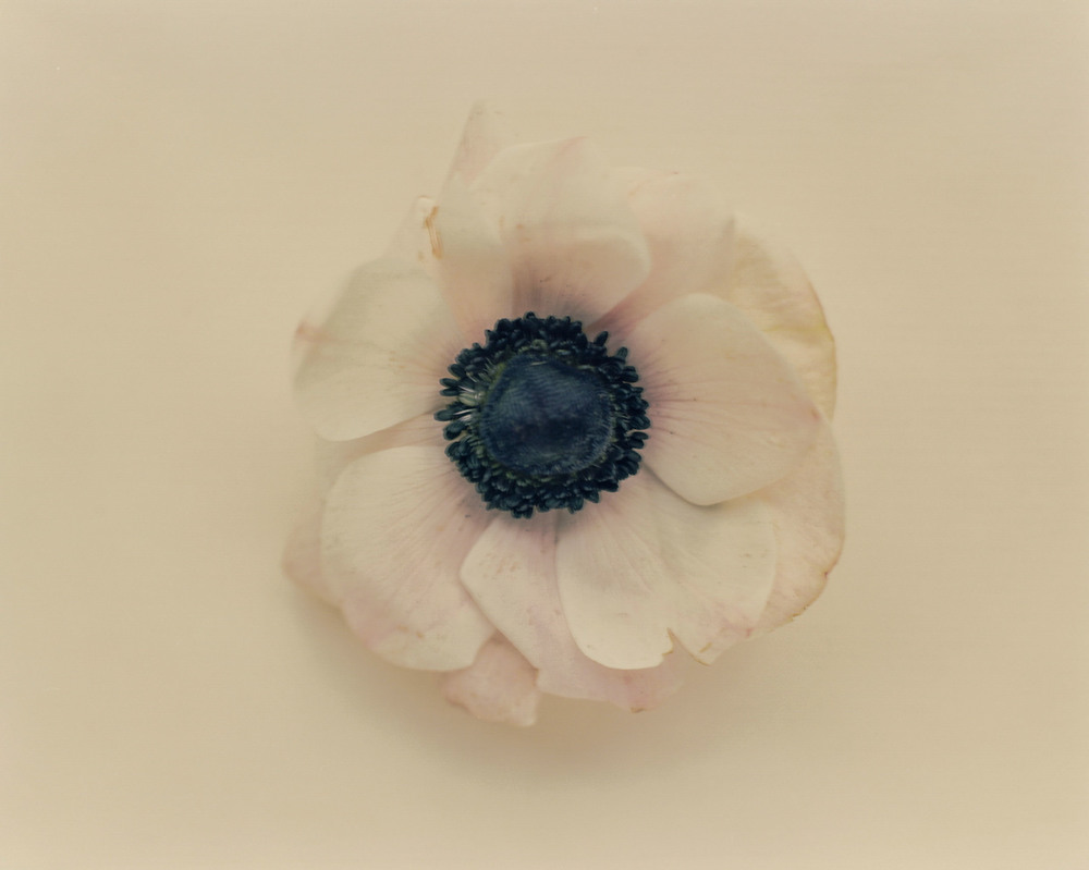 Casey Moore Flowers-003.jpg