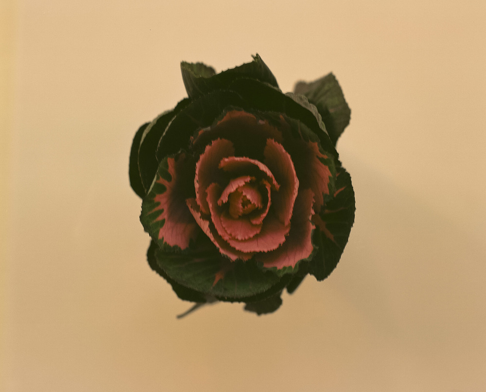 casey moore flower print-3.jpg