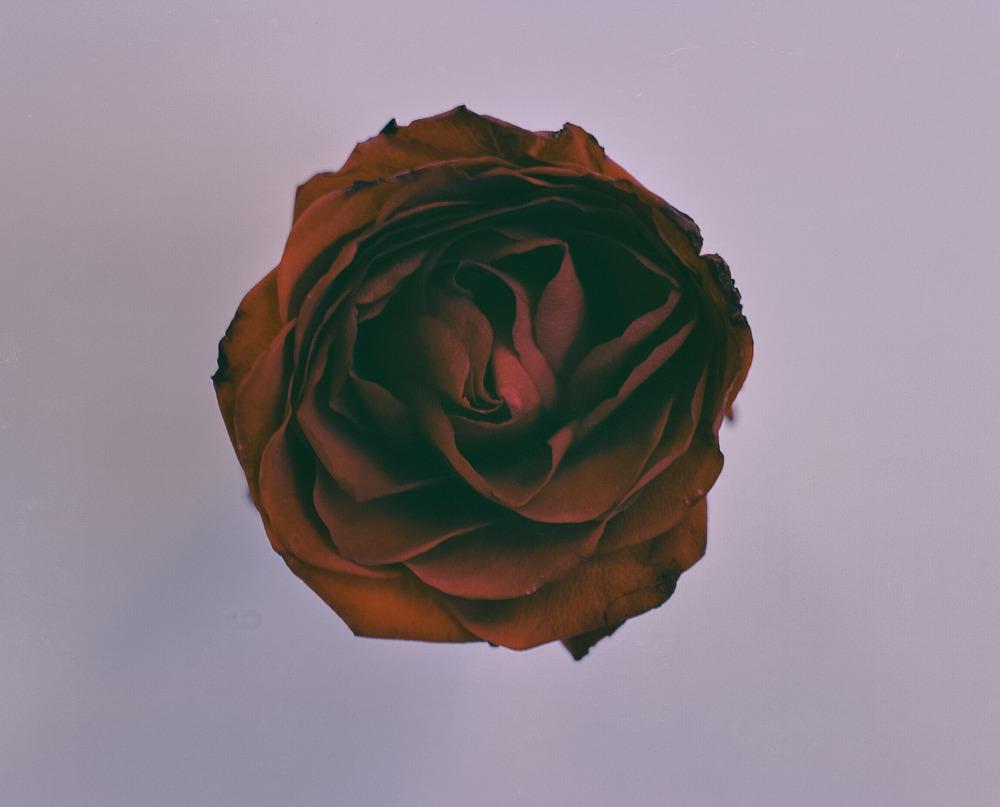 casey moore flower print-6.jpg