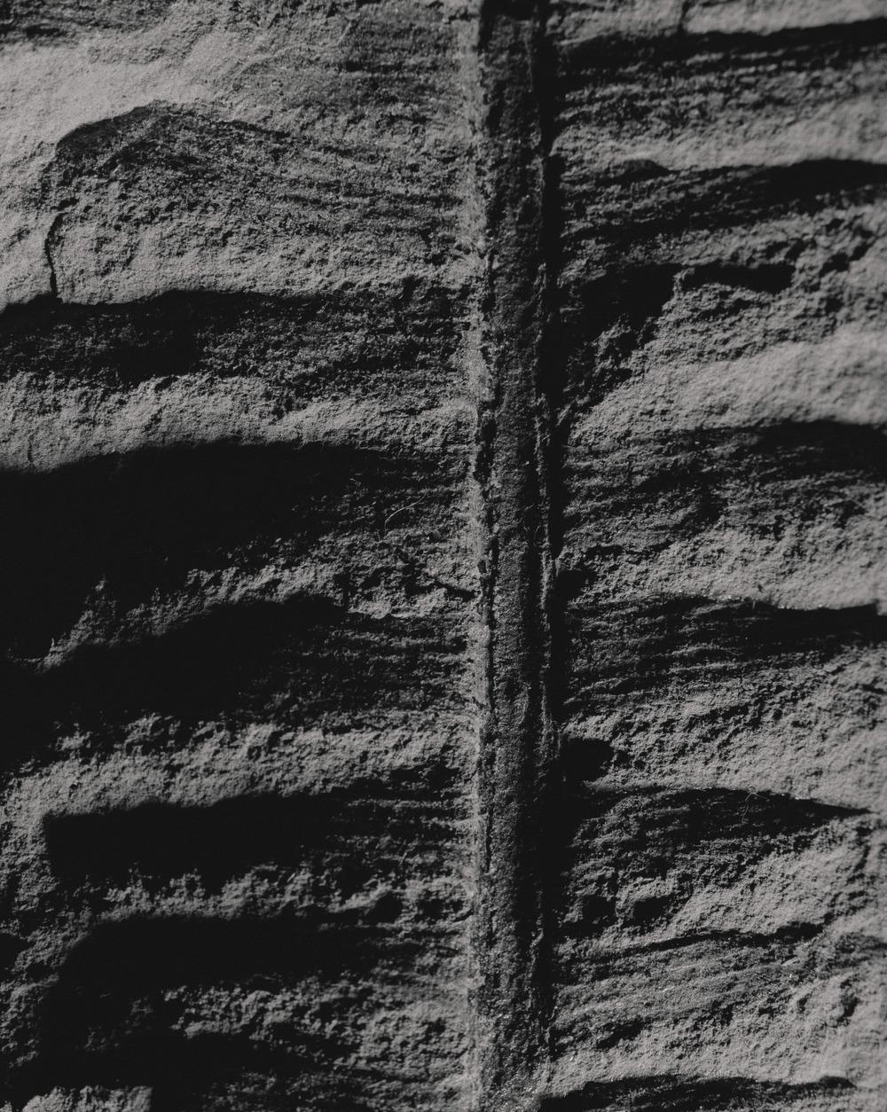Casey Moore Natures Negatives Fossils-3.jpg