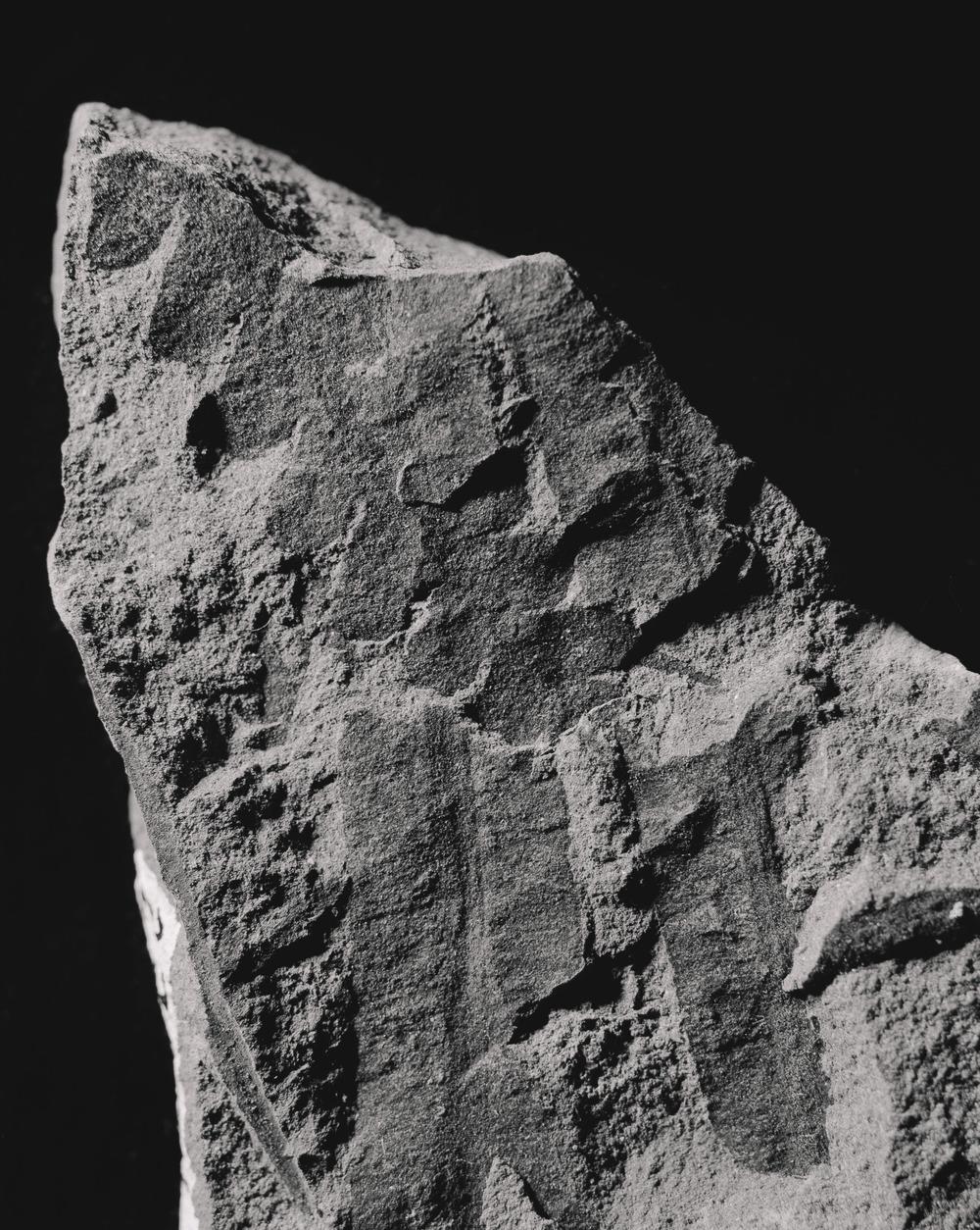 Casey Moore Natures Negatives Fossils-7.jpg