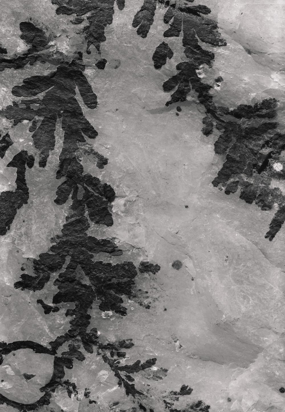 Casey Moore Natures Negatives Fossils-1.jpg