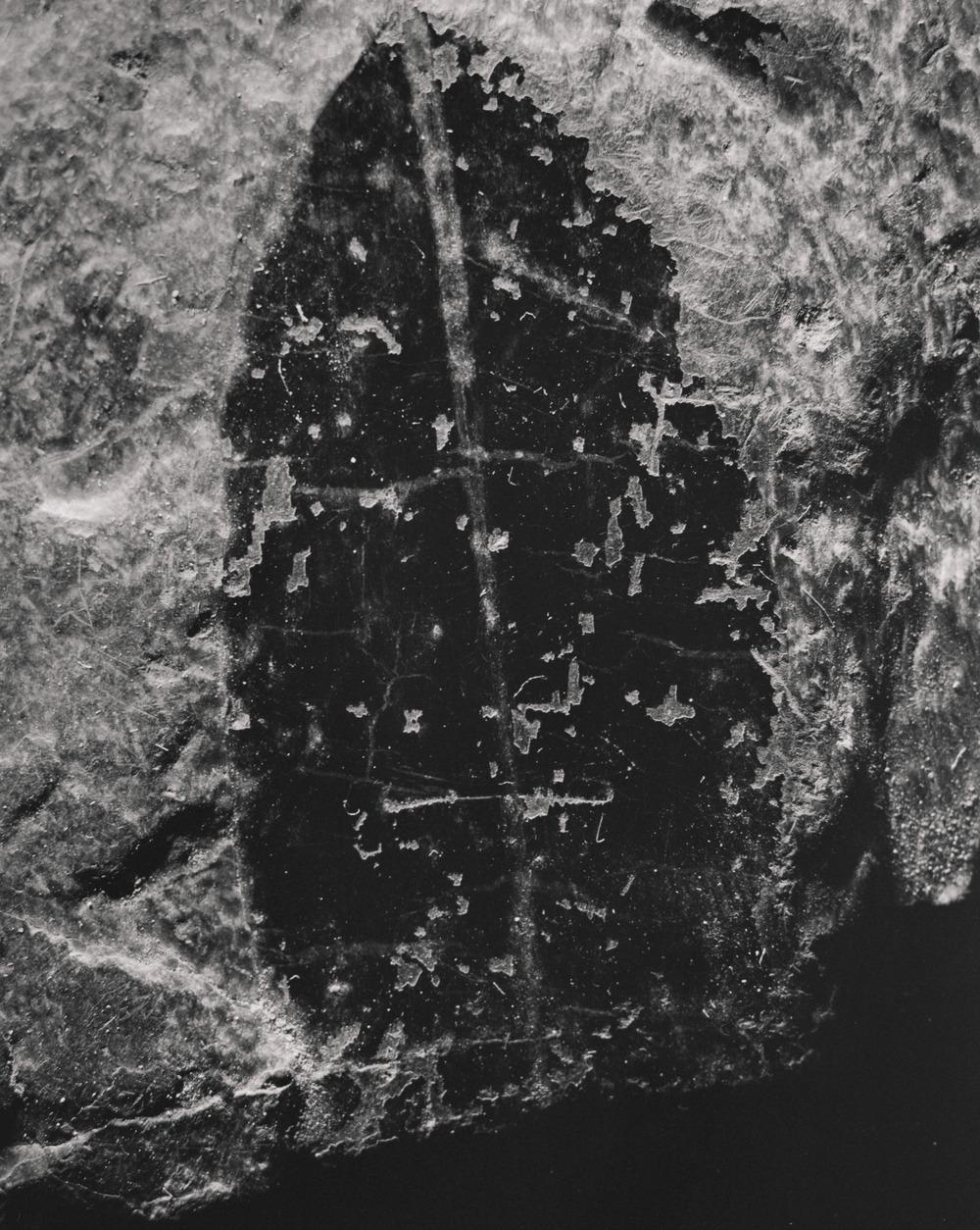 Casey Moore Natures Negatives Fossils-9.jpg