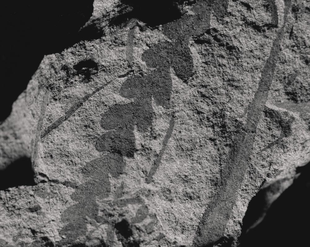 Casey Moore Natures Negatives Fossils-8.jpg