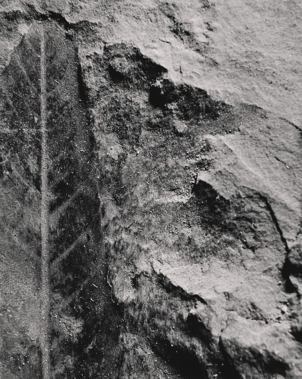 Casey Moore Natures Negatives Fossils-11.jpg
