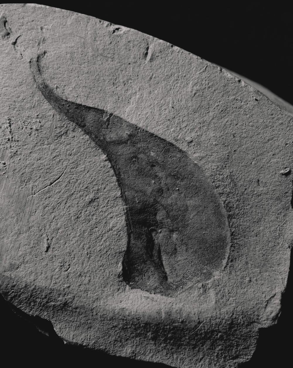 Casey Moore Natures Negatives Fossils-13.jpg