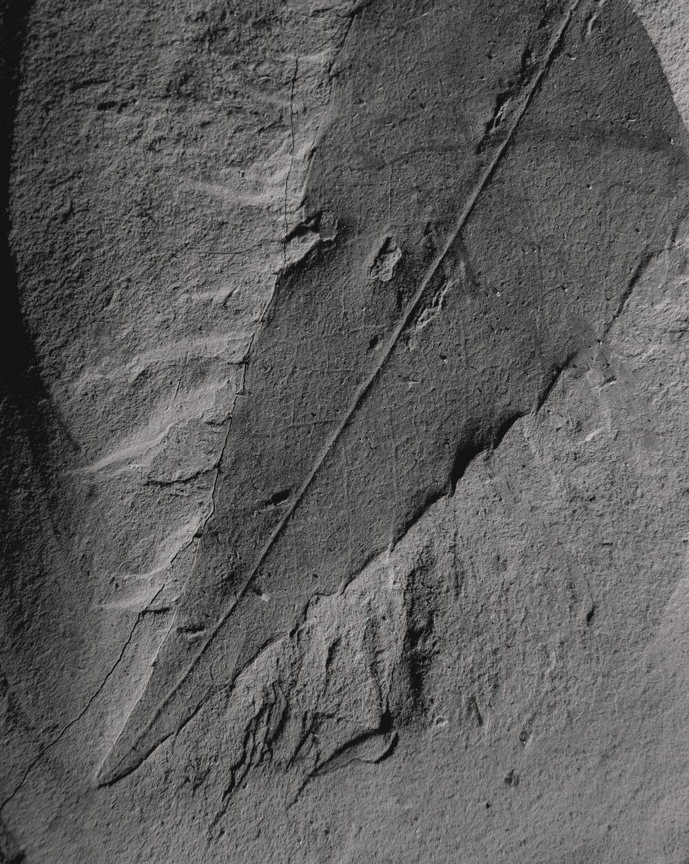 Casey Moore Natures Negatives Fossils-14.jpg