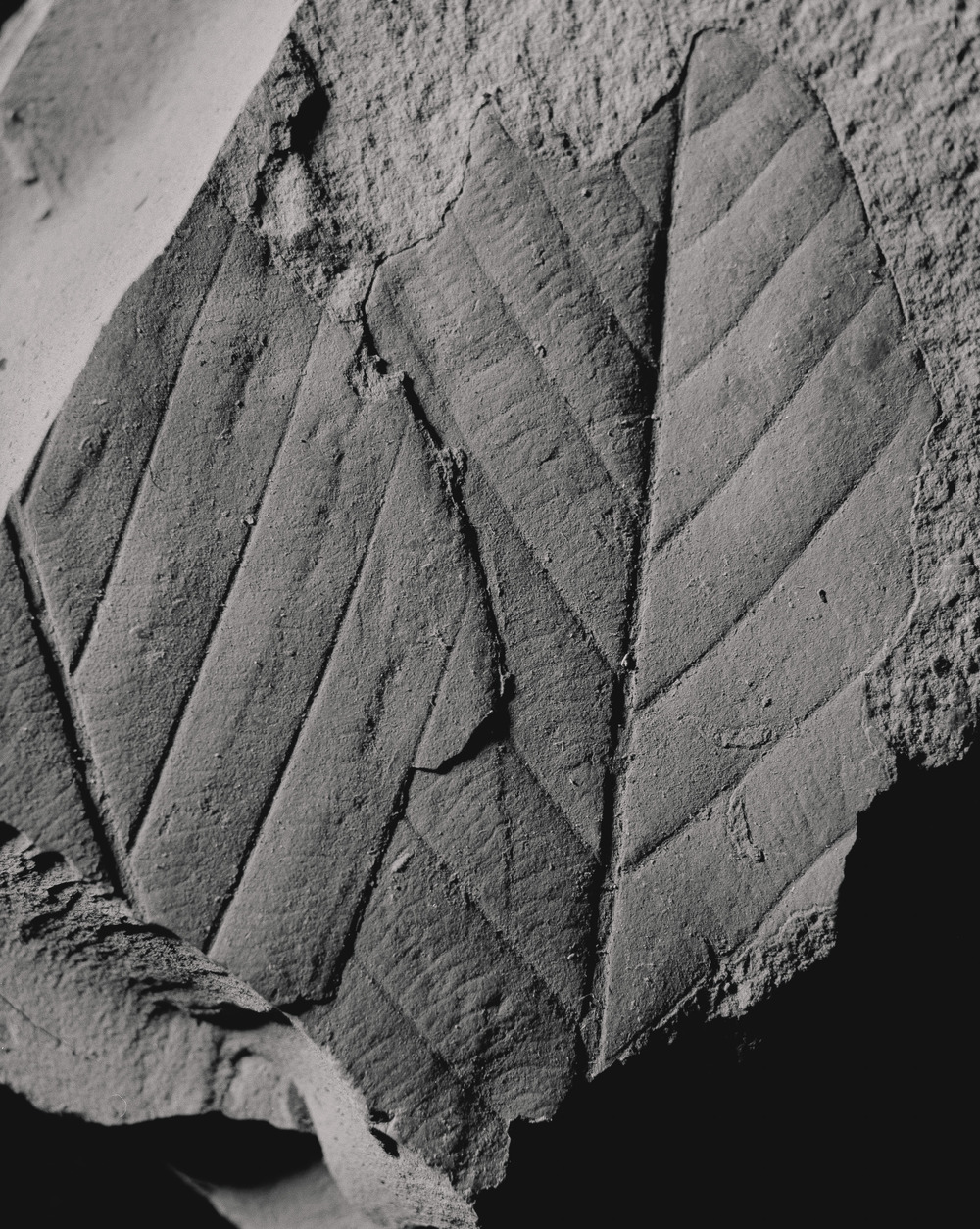 Casey Moore Natures Negatives Fossils-15.jpg